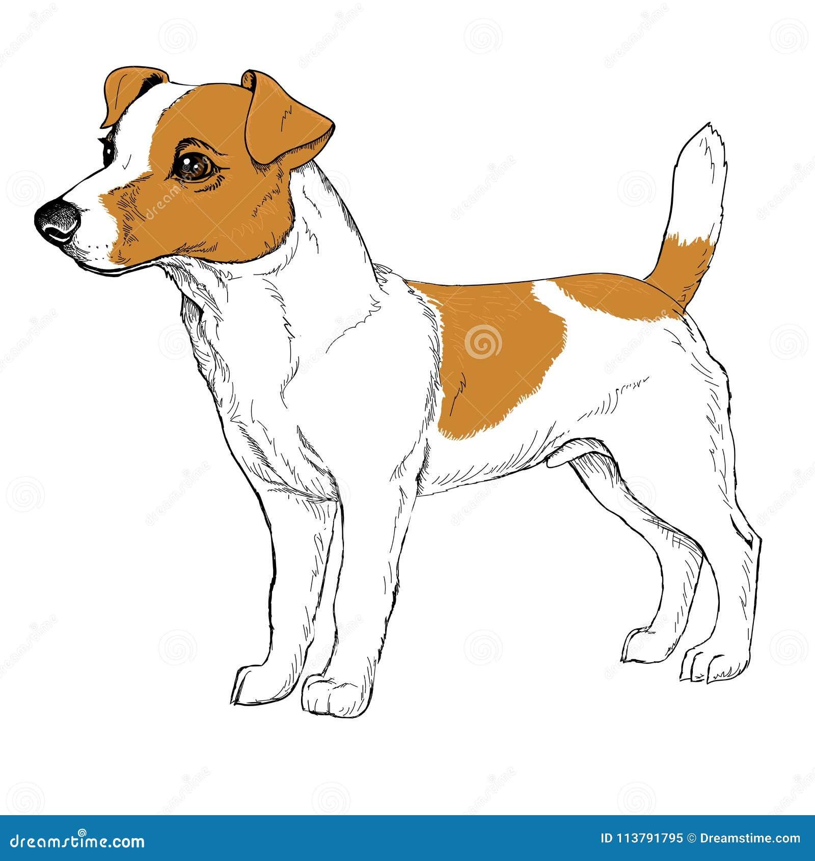 Croquis de chien jaune