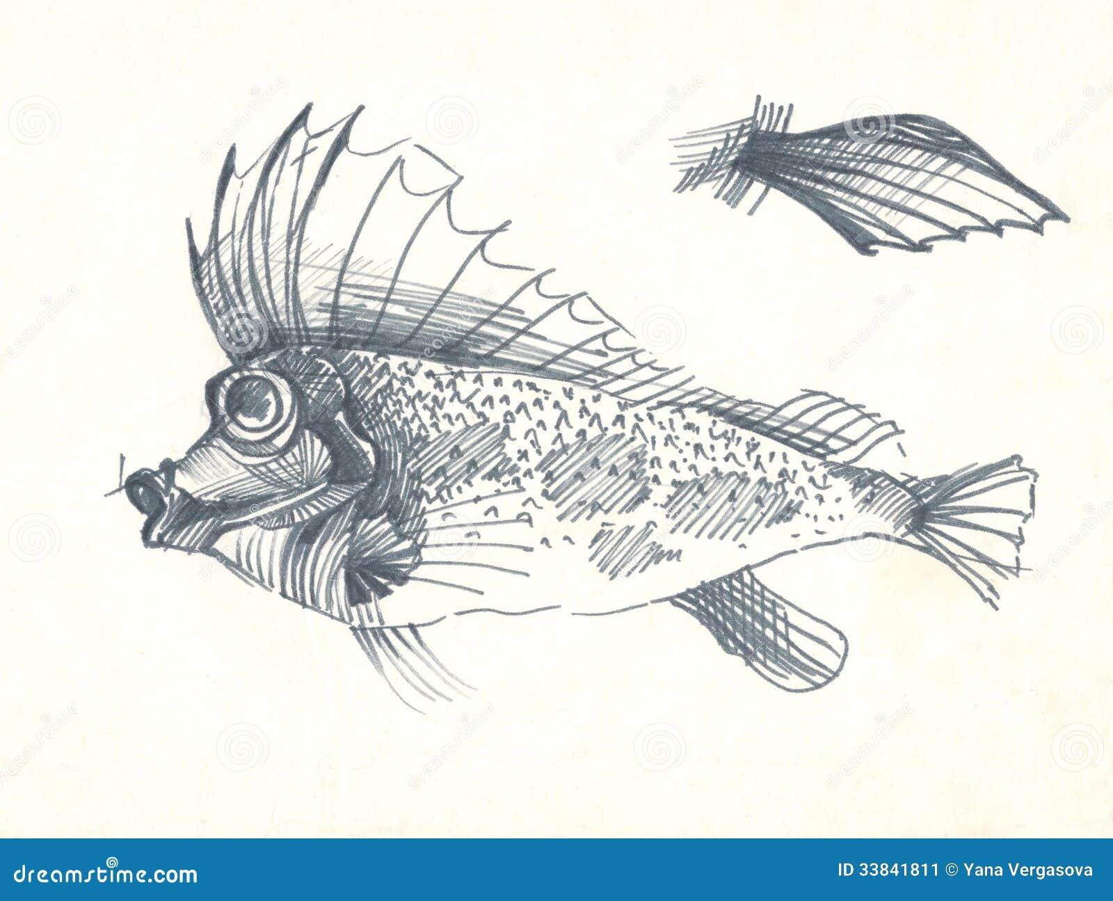 Croquis de dessin de stylo de poissons illustration stock - Croquis poisson ...