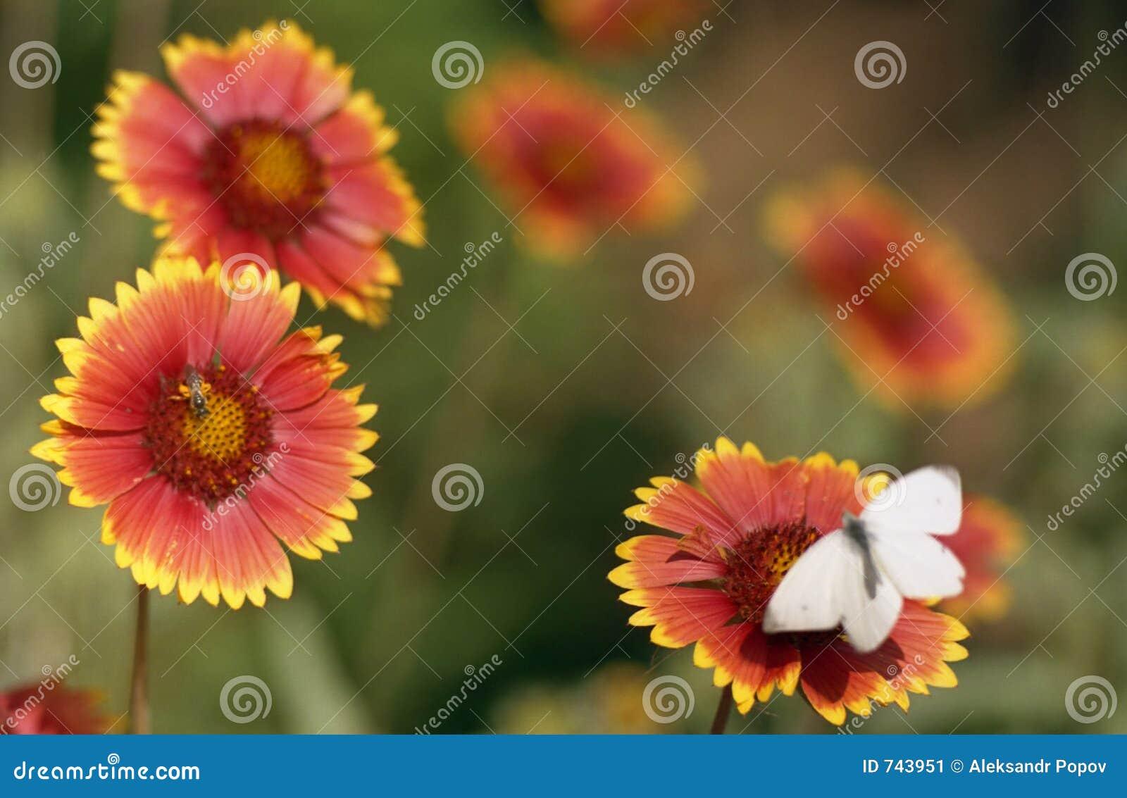 Croquis de fleur