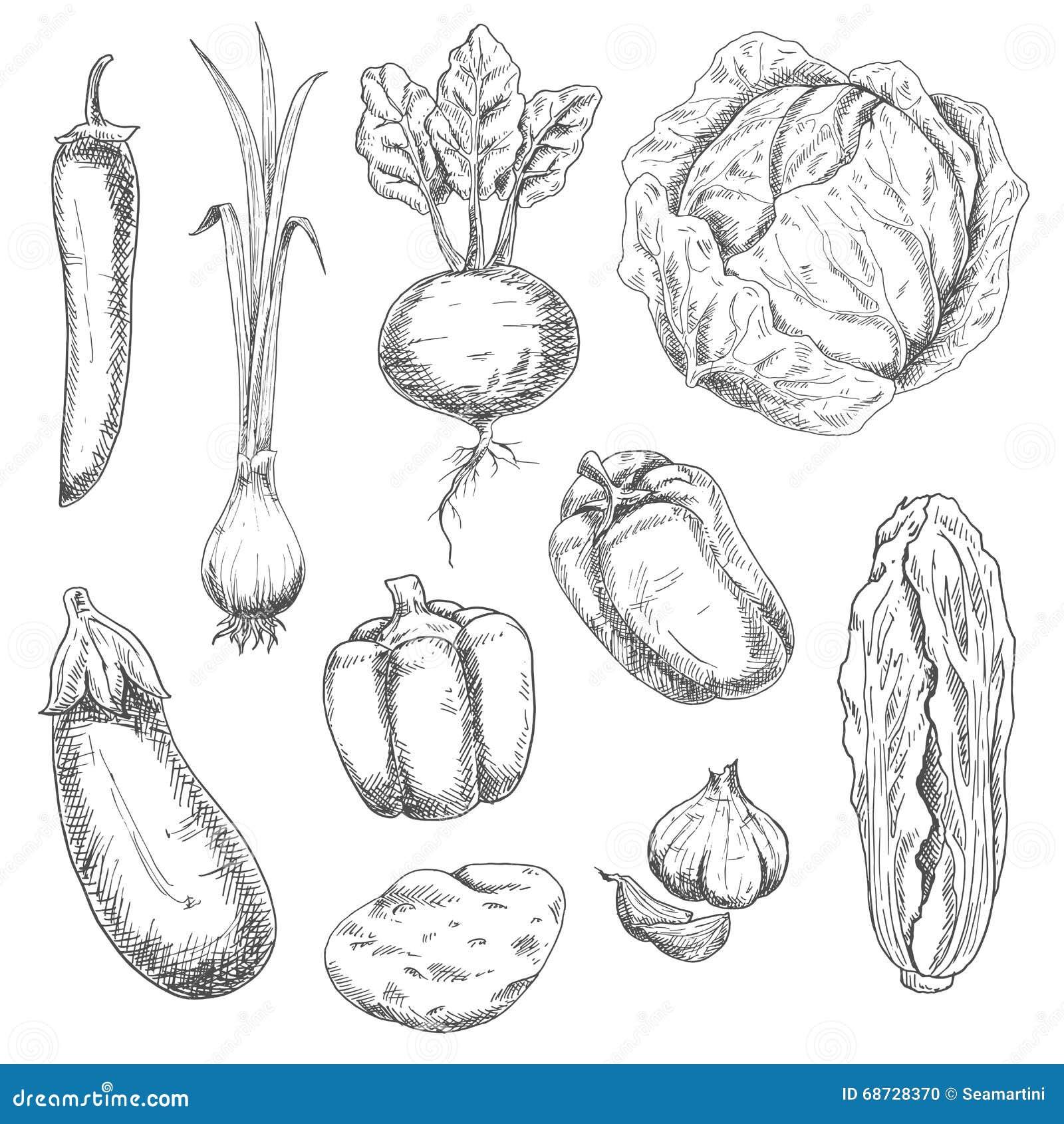 Croquis De Legumes De Ferme Pour Le Livre De Recette
