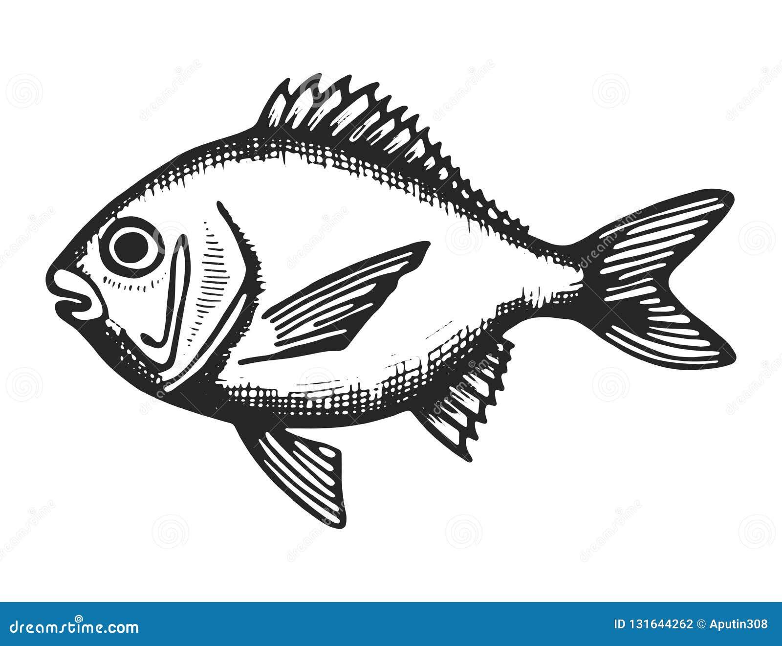 Croquis de mer de poissons noir sous-marin animal animal d isolement