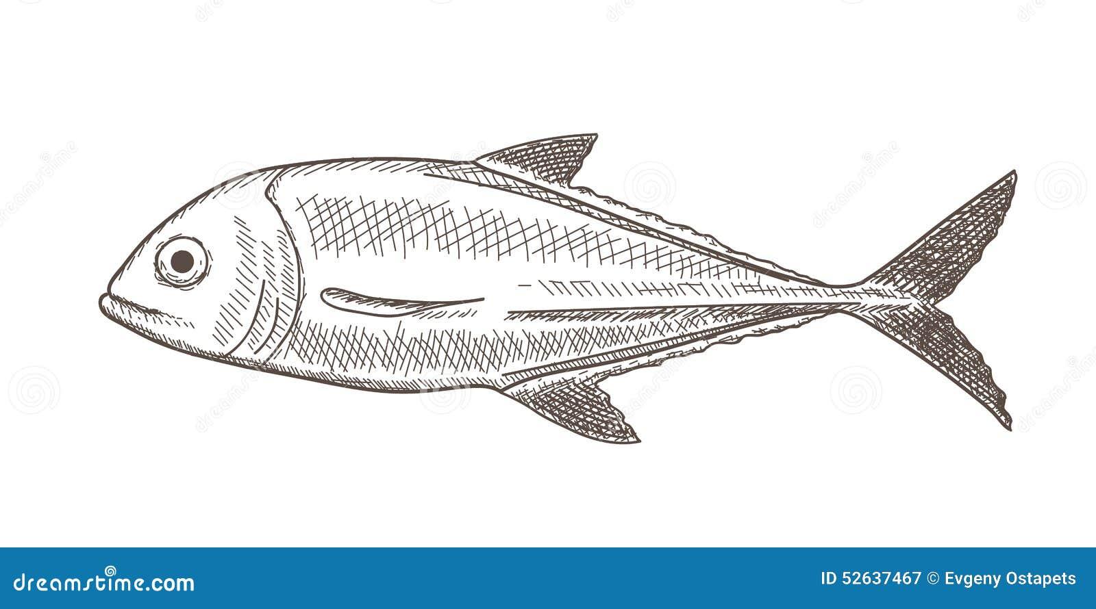 Croquis de poissons illustration de vecteur illustration - Croquis poisson ...