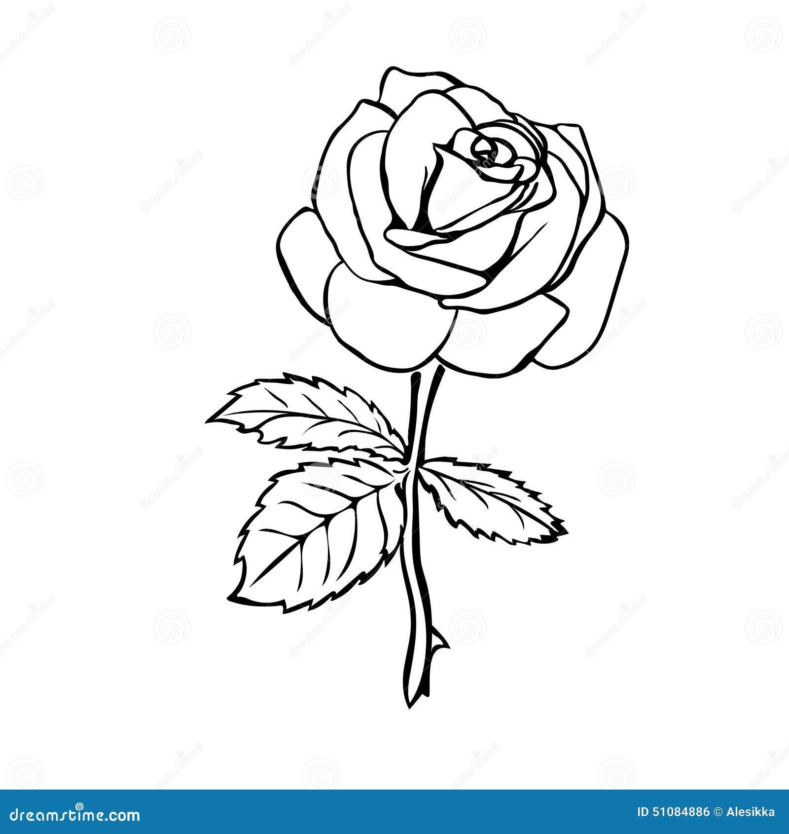 Croquis de Rose illustration stock. Image du élément ...