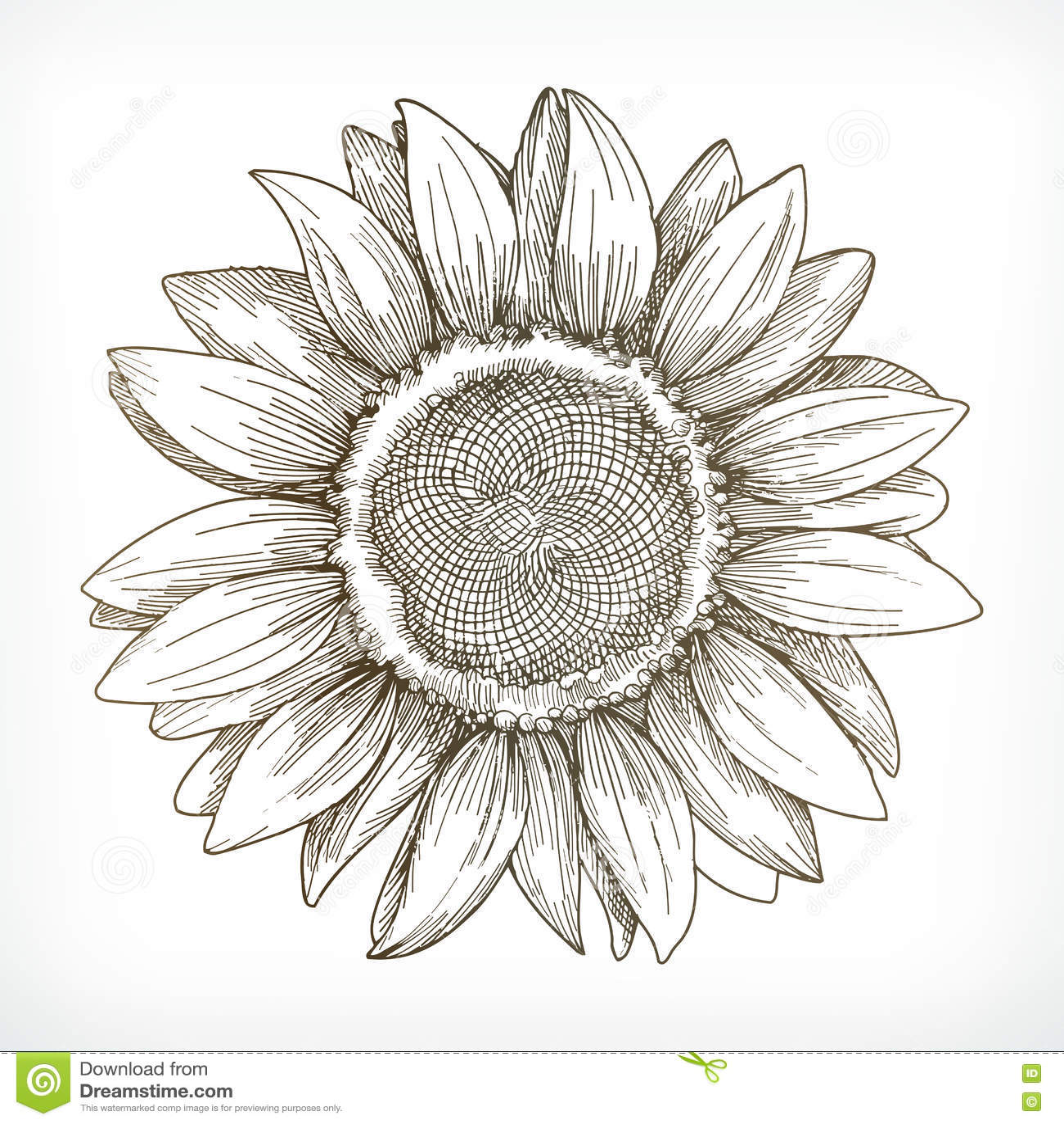 Croquis de tournesol dessin de main illustration de - Dessin de tournesol ...