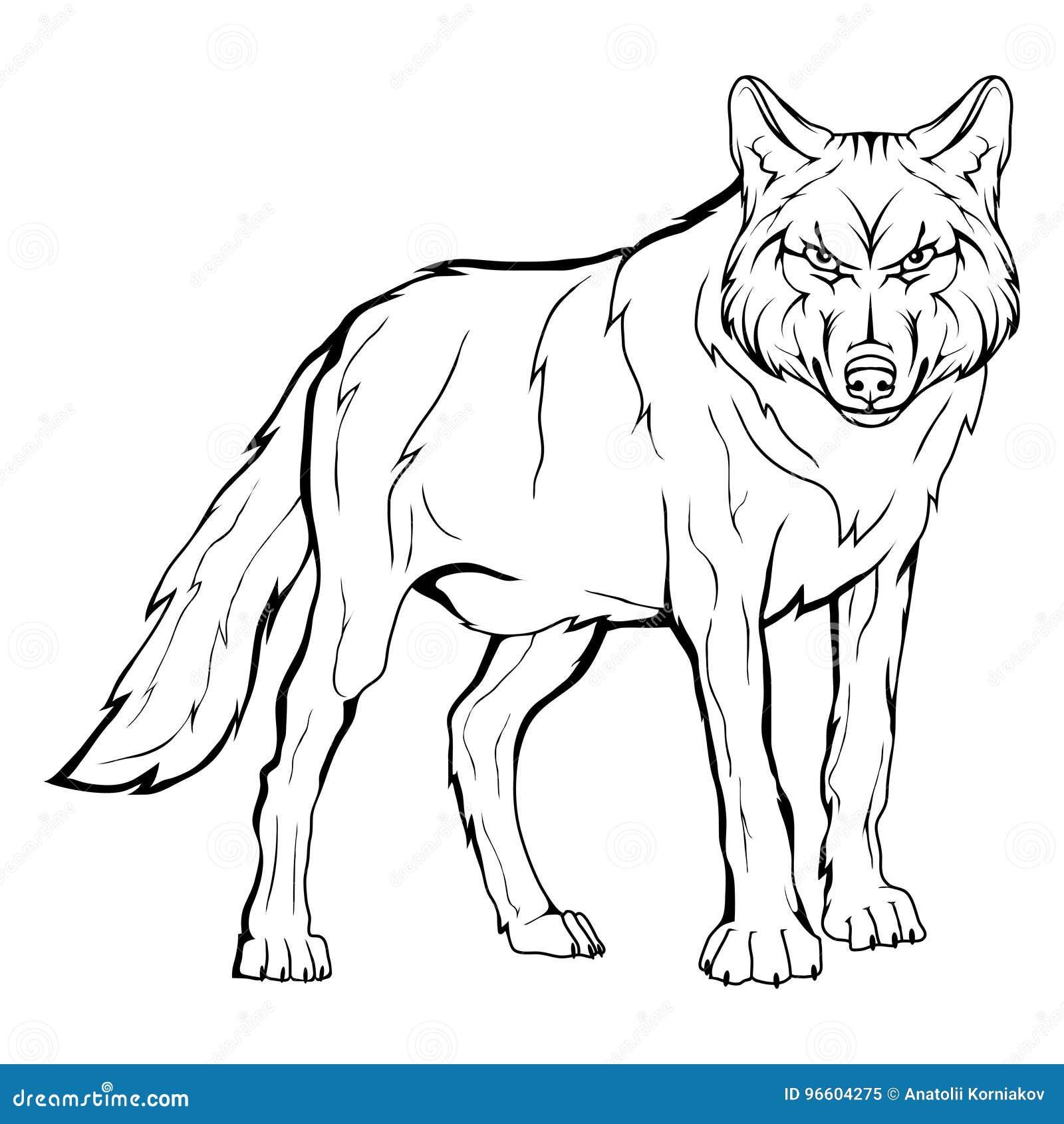 Croquis de vecteur d 39 un loup illustration de vecteur - Un loup dessin ...