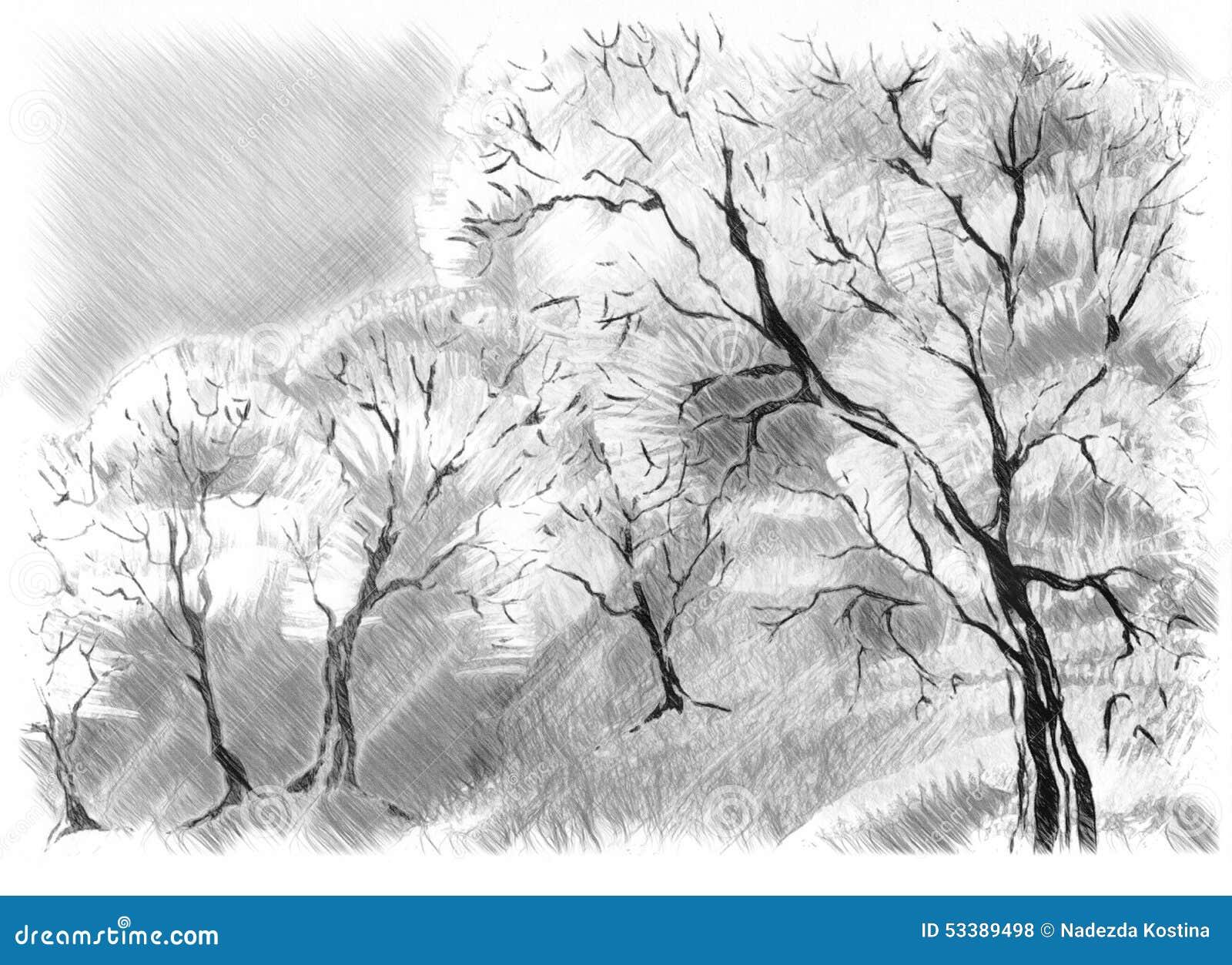 Croquis des arbres illustration stock illustration du - Croquis arbre ...