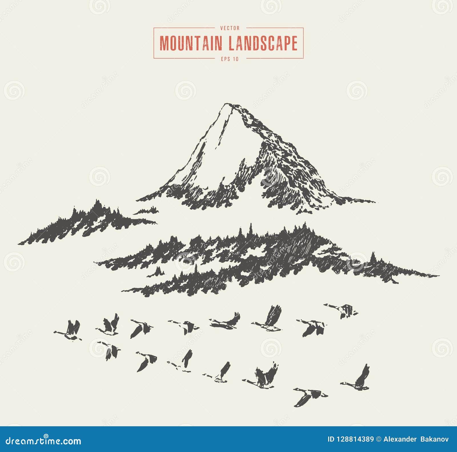Croquis dessiné par vecteur de forêt de sapin de paysage de montagne