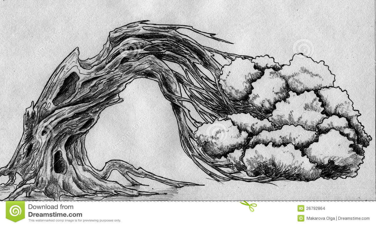 Croquis incurv d 39 arbre illustration stock illustration - Croquis arbre ...