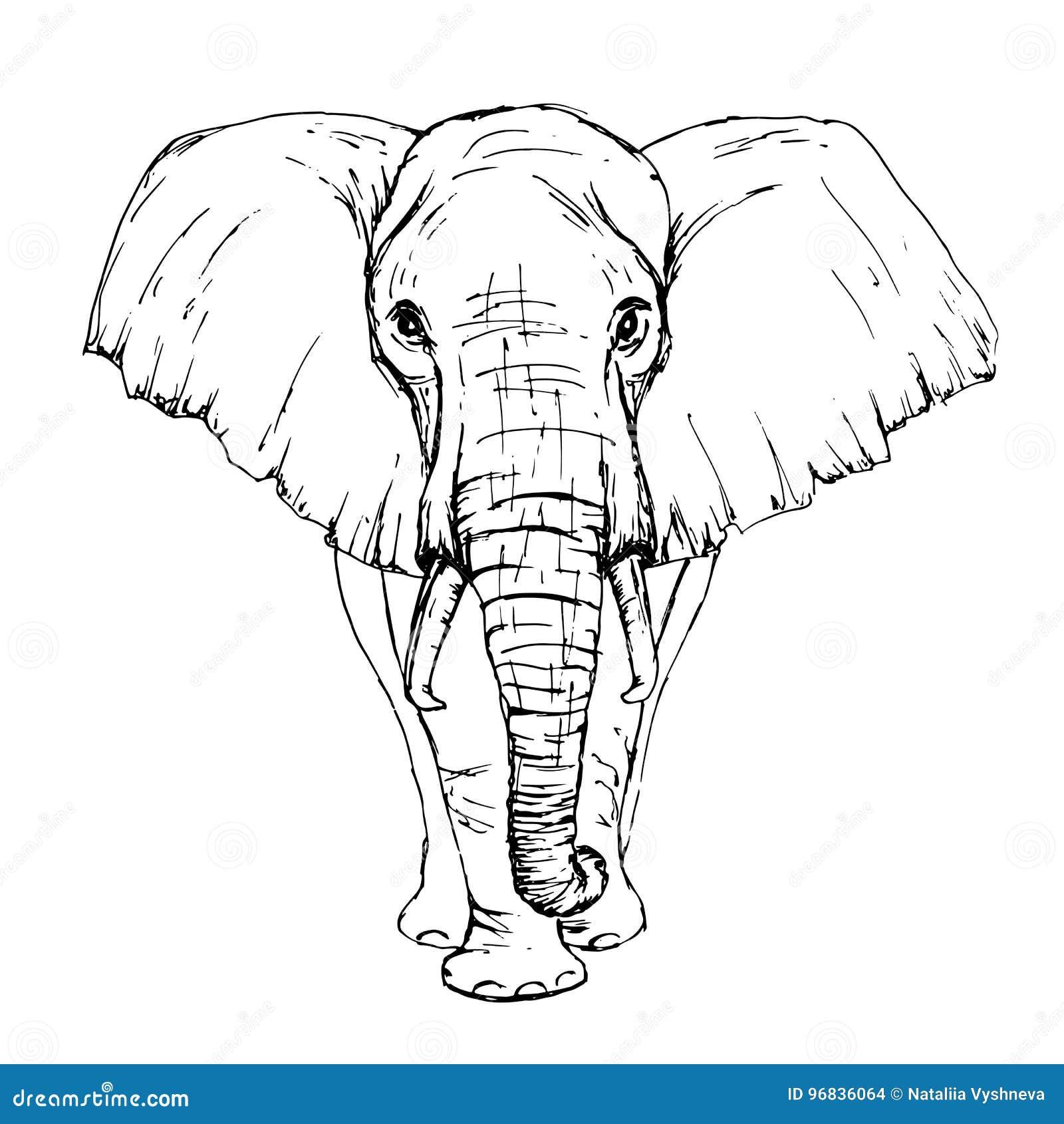Croquis Par Vue De Face D Elephant Africain De Stylo Illustration De