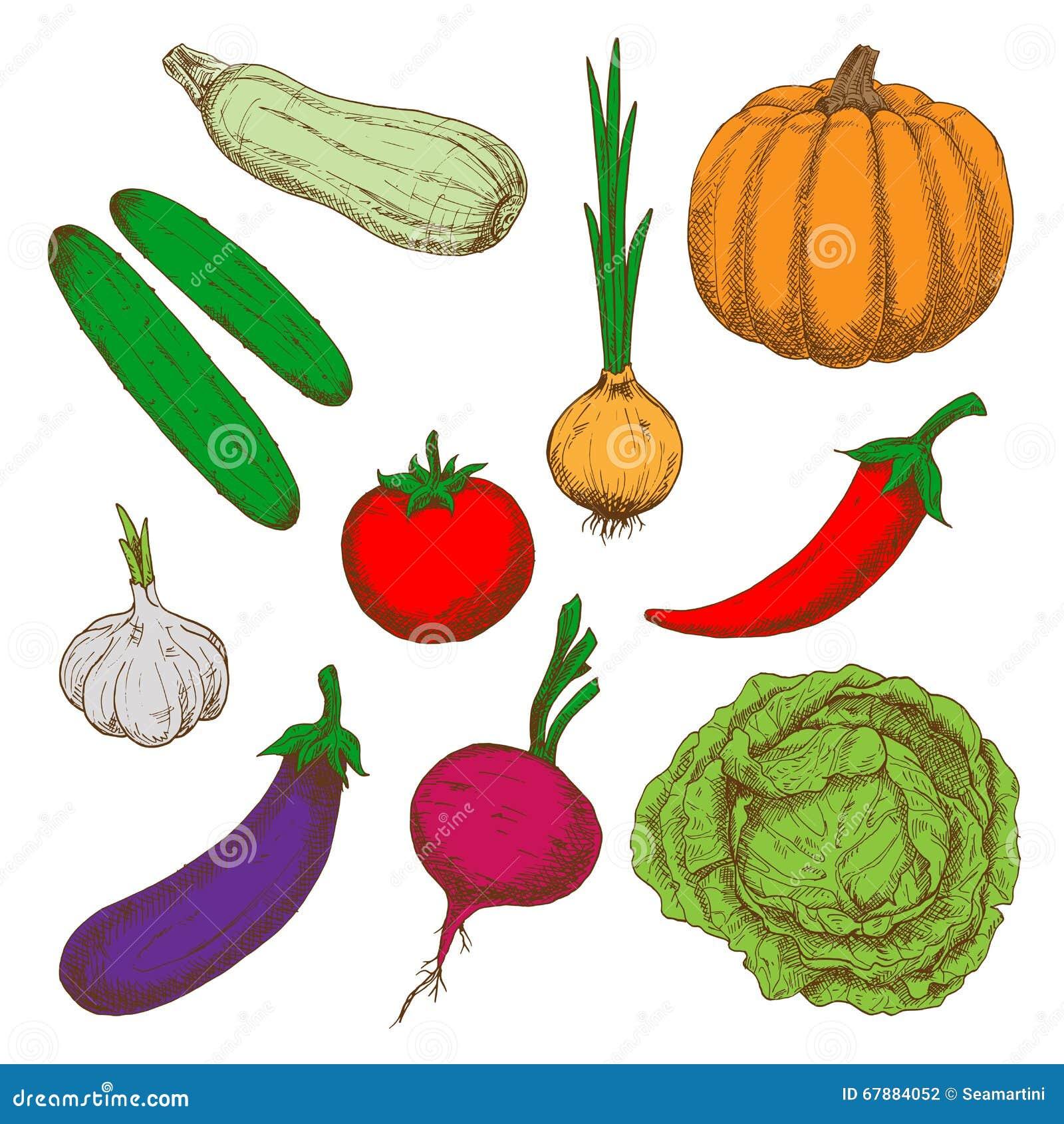 Croquis sains de couleur de légumes de ferme