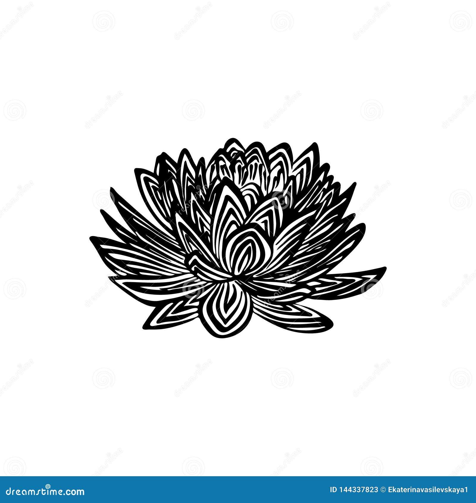 Croquis Tiré Par La Main Densemble De Fleur De Lotus Dessin