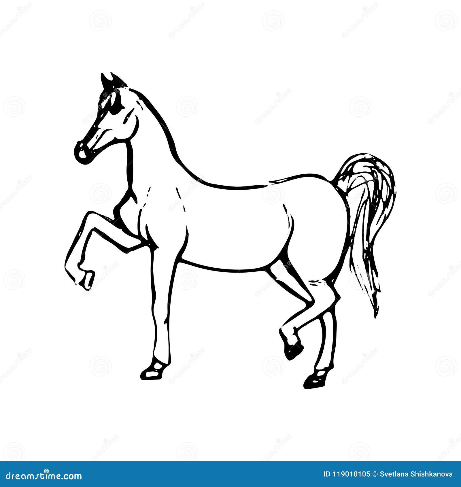 Croquis tir par la main de cheval dessin au trait noir d - Dessin cheval de trait ...