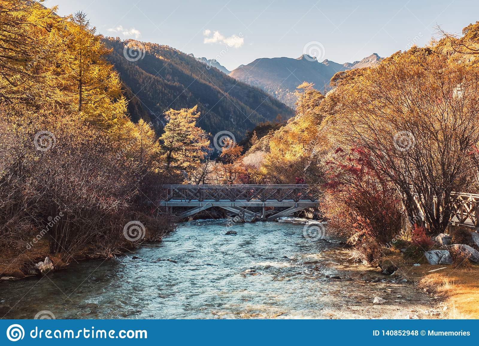 Cross Bridge In Golden Pine Forest In Valley At Yading ...
