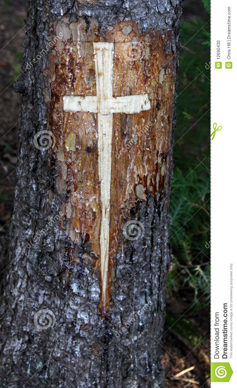 cross carved in a tree stock photo image of pine