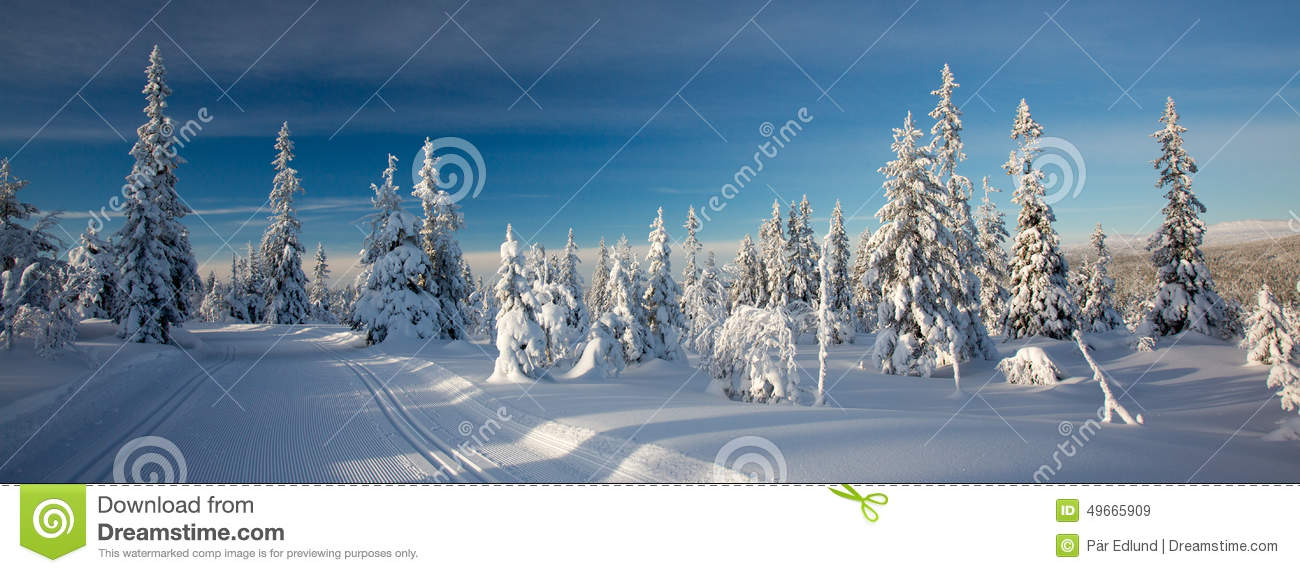 A winter landscape, decorated with cross country skiing trails.