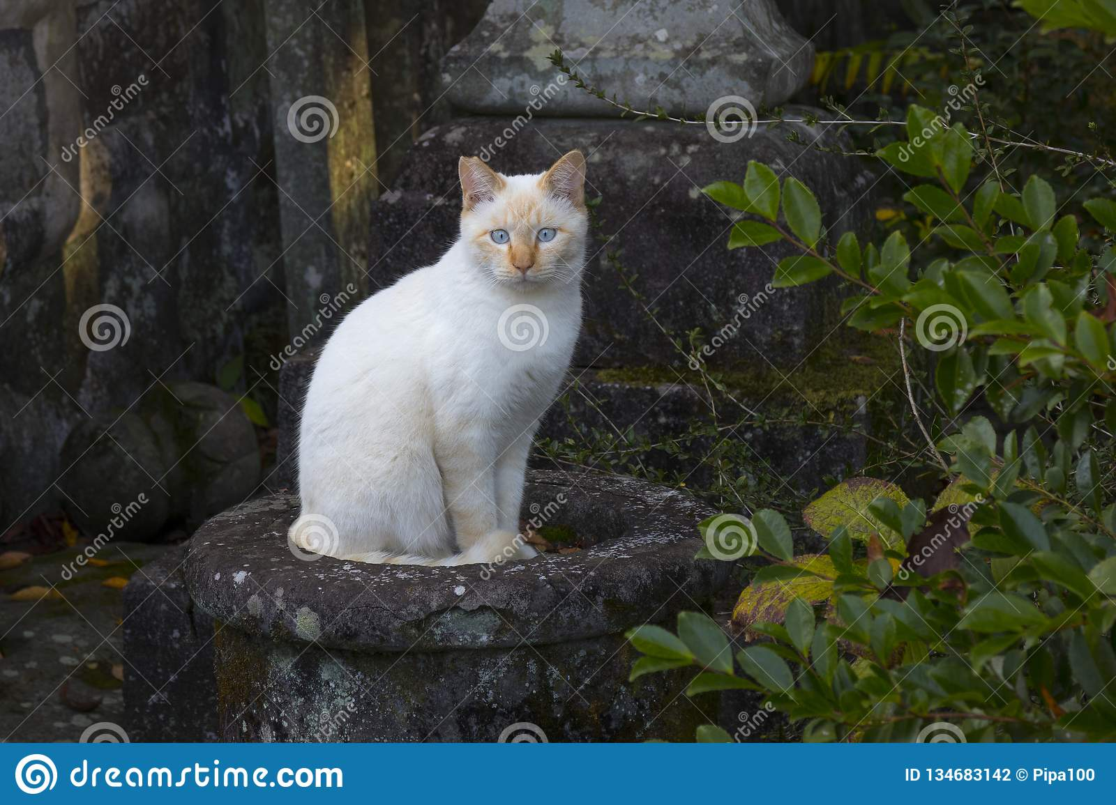Alley cat sitting near the temple