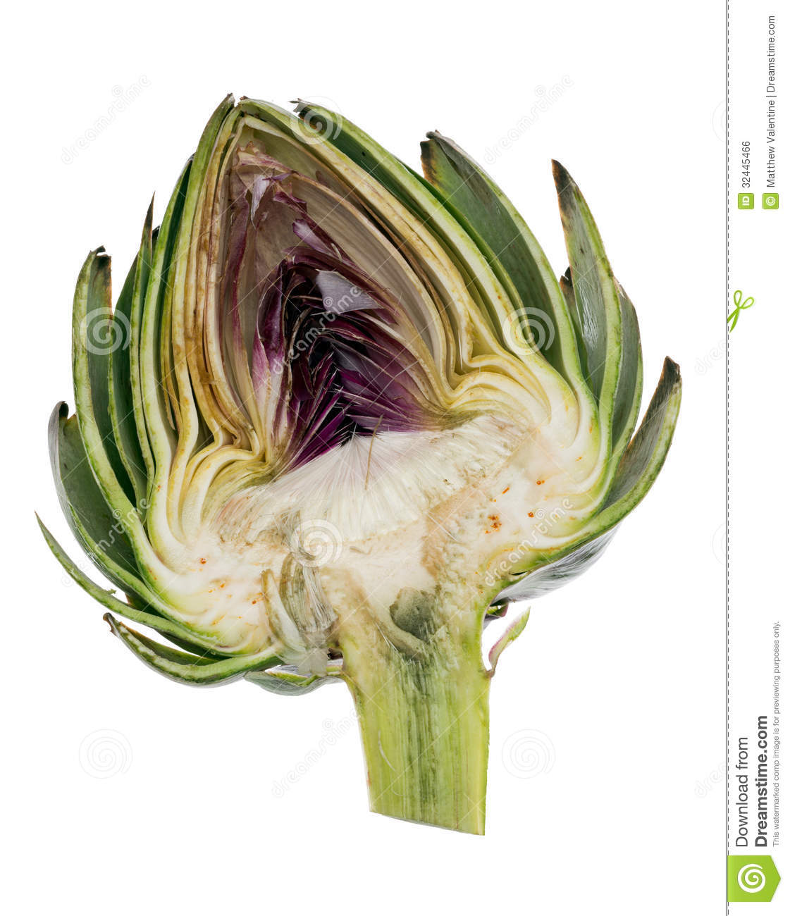 Cross Section Of Artichoke Isolated Over A Pure White