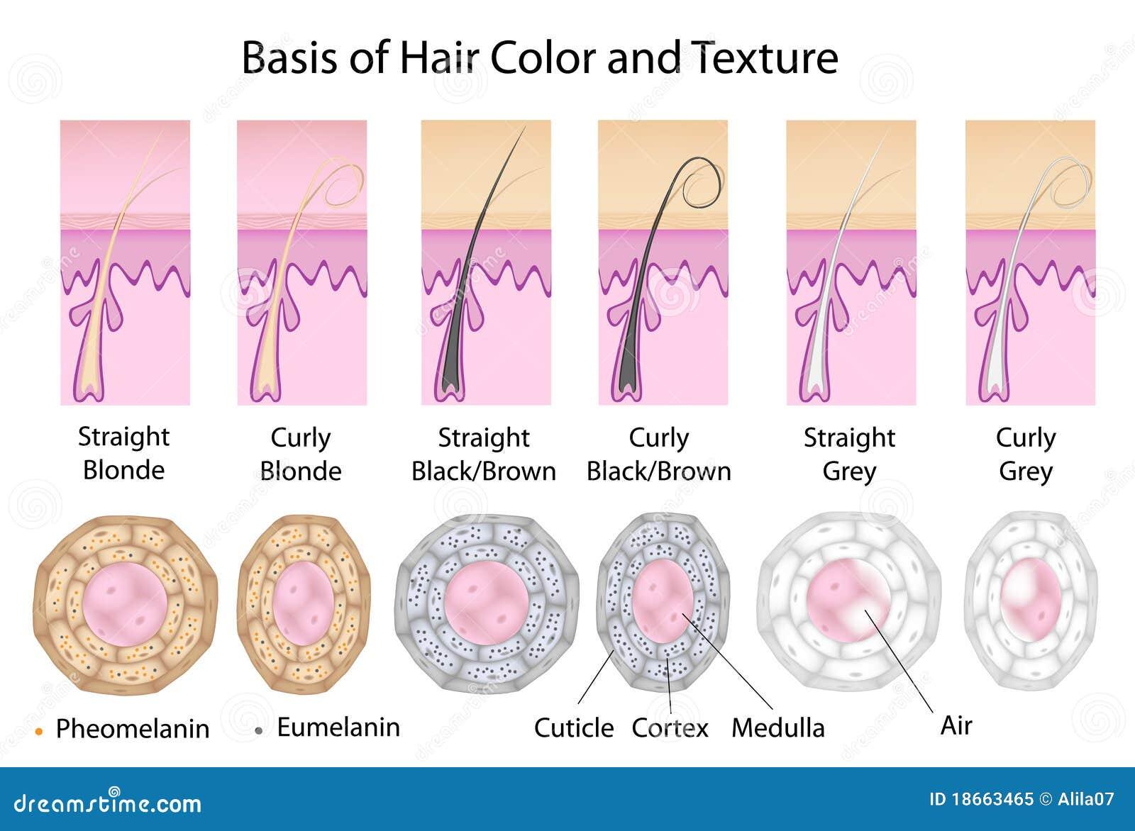 От чего зависит форма волос