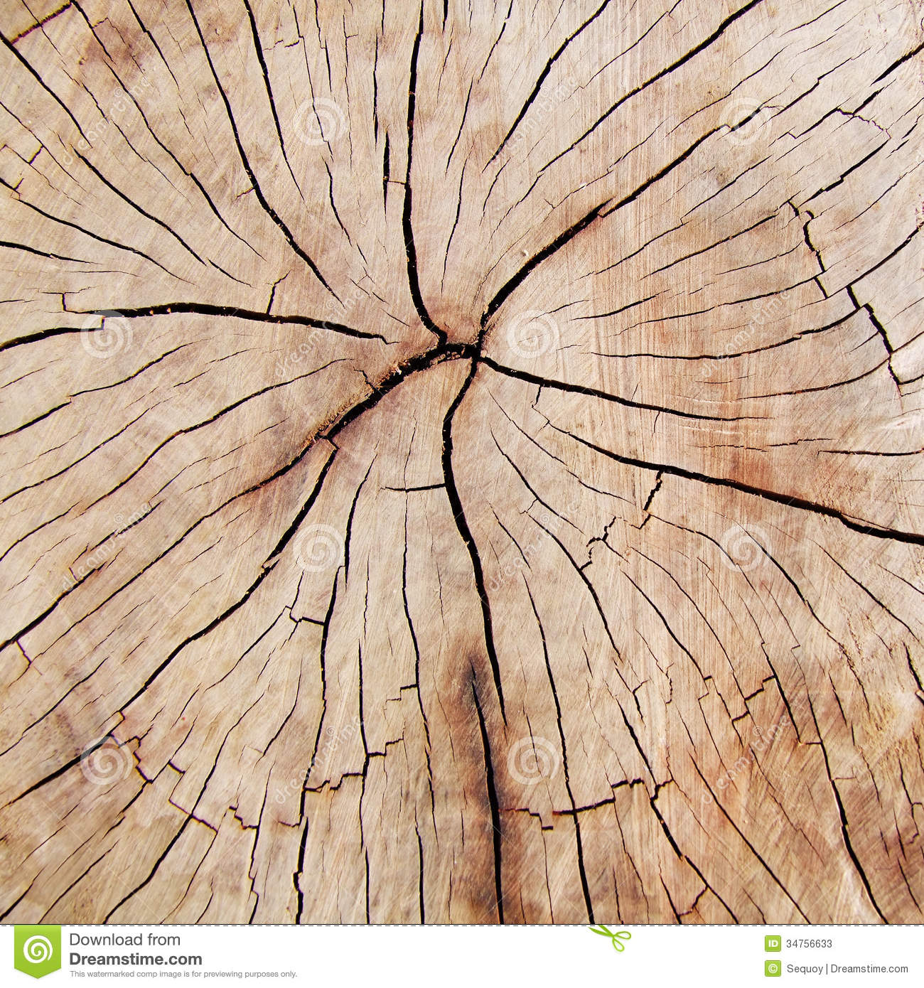 Cross Section Of Fissured Wood Stock Image Image 34756633