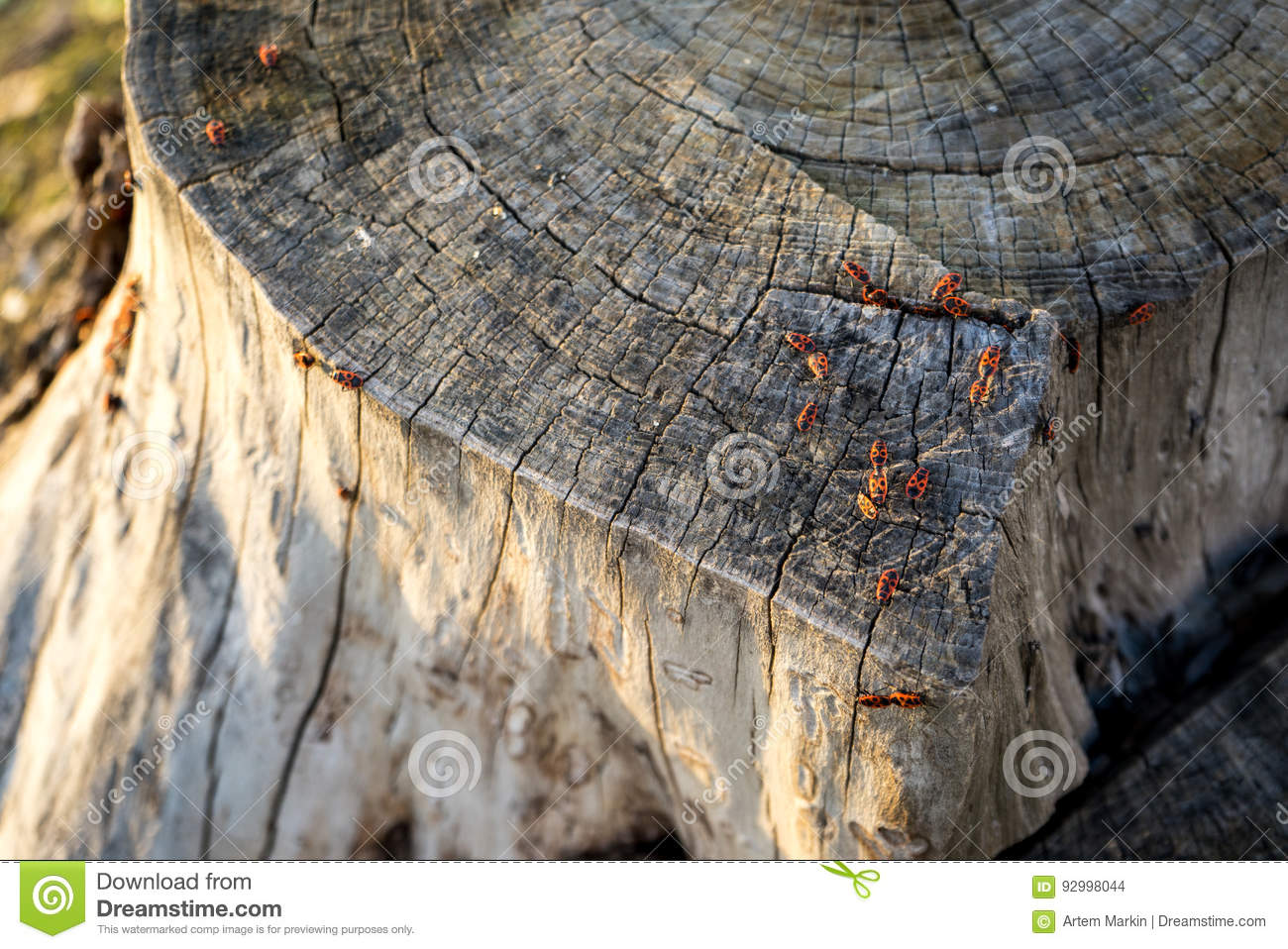 cross dating tree rings The primary function for looking the crossdating of a tree-ring data set in dplr is corrrwlseg this function looks at the correlation between each.