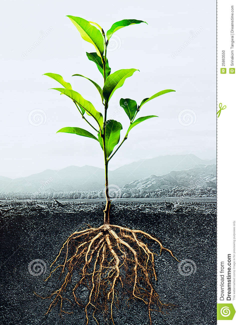 Cross section of soil with a green plant stock photo for Soil and green