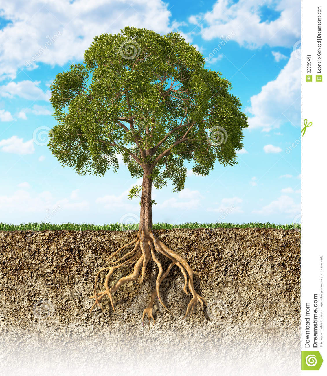 Cross section of soil showing a tree with its roots.