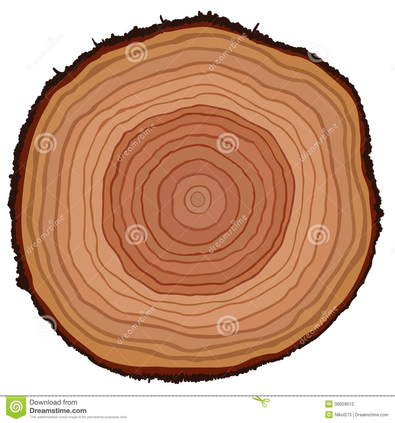 Cross section of tree stump Cross Section Of A Tree