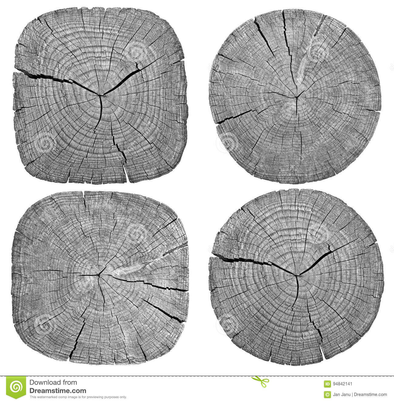 Cross Section Of Tree Trunk Stock Image Image Of Ring
