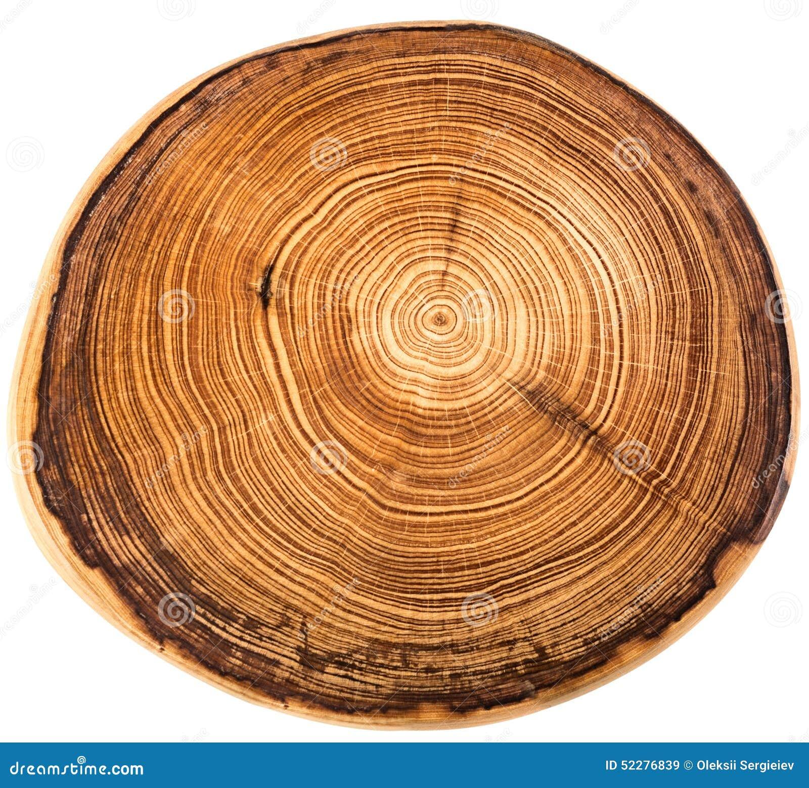 crossection d 39 un tronc d 39 arbre photo stock image 52276839. Black Bedroom Furniture Sets. Home Design Ideas