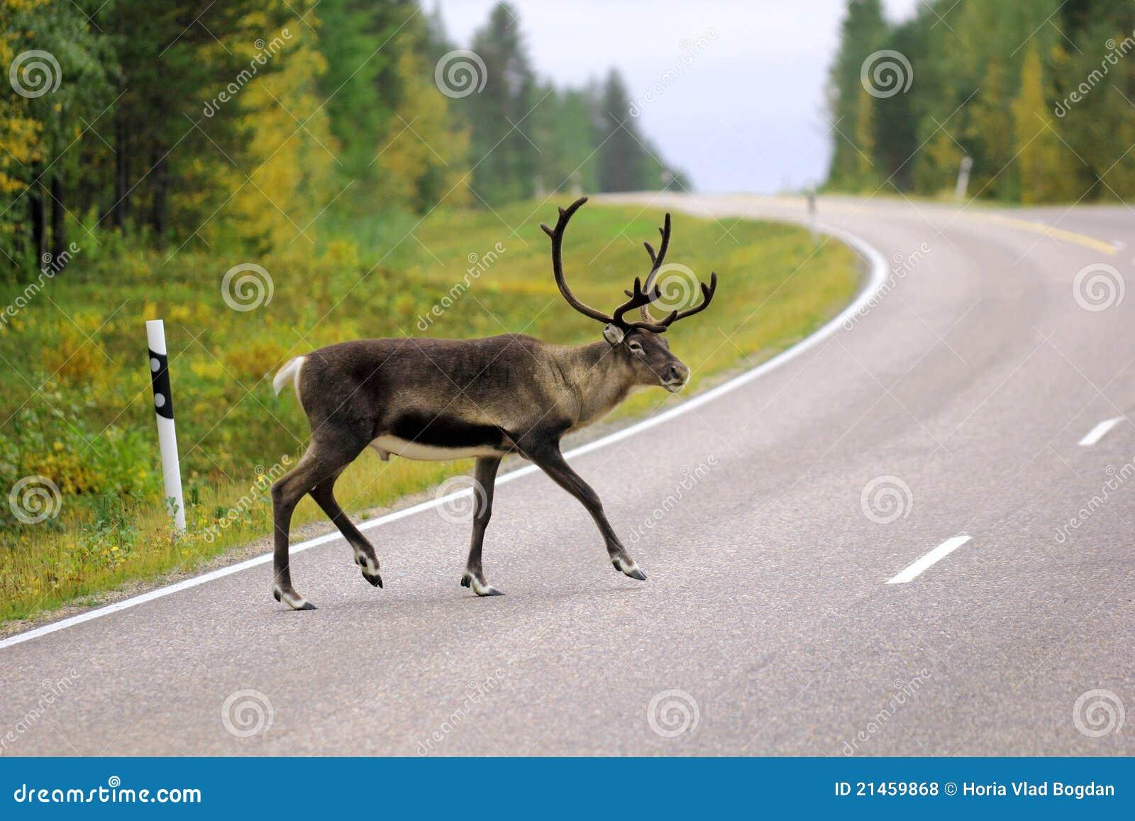 Crossingrenväg wild sweden