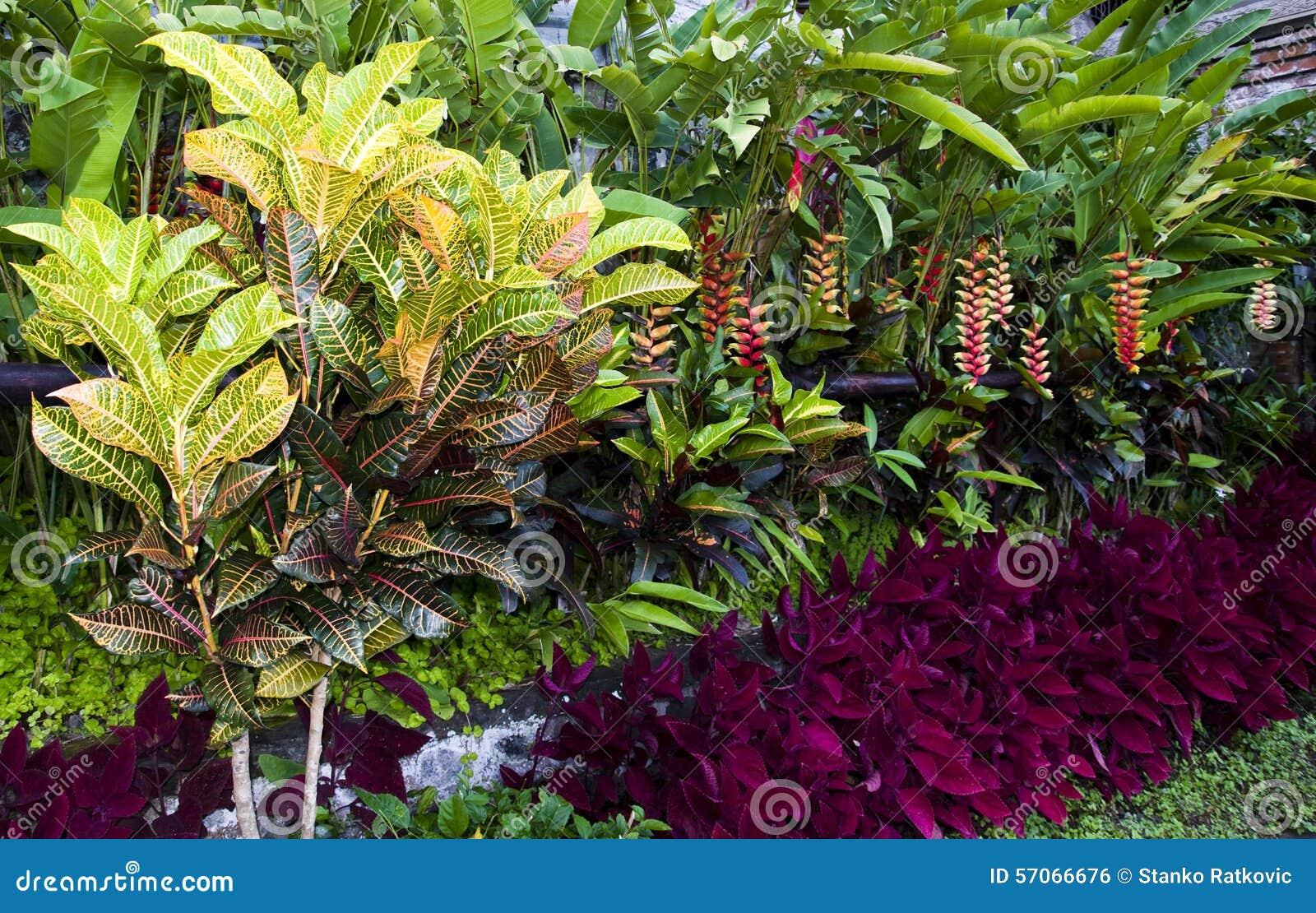 Crotoninstallaties met kleurrijke bladeren
