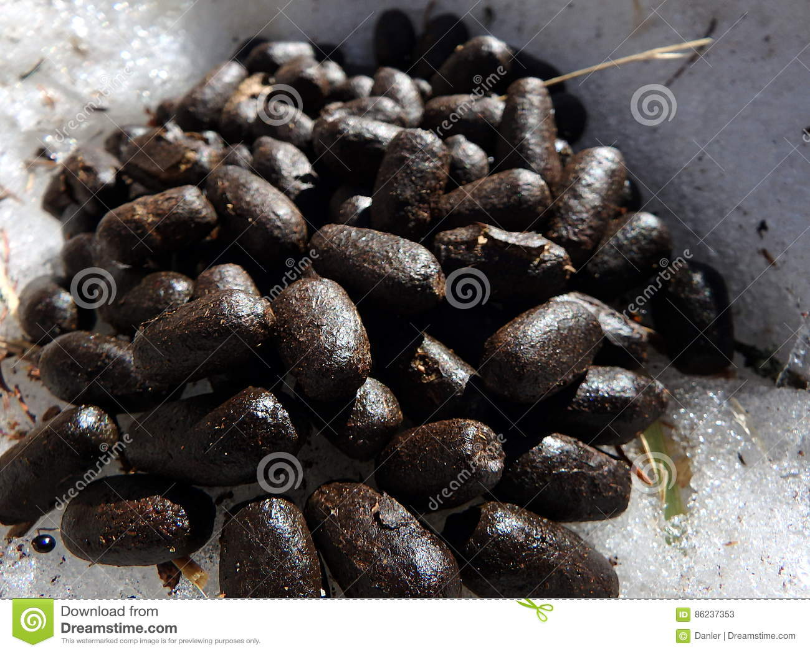 crottes de chamois pictures - photo #12