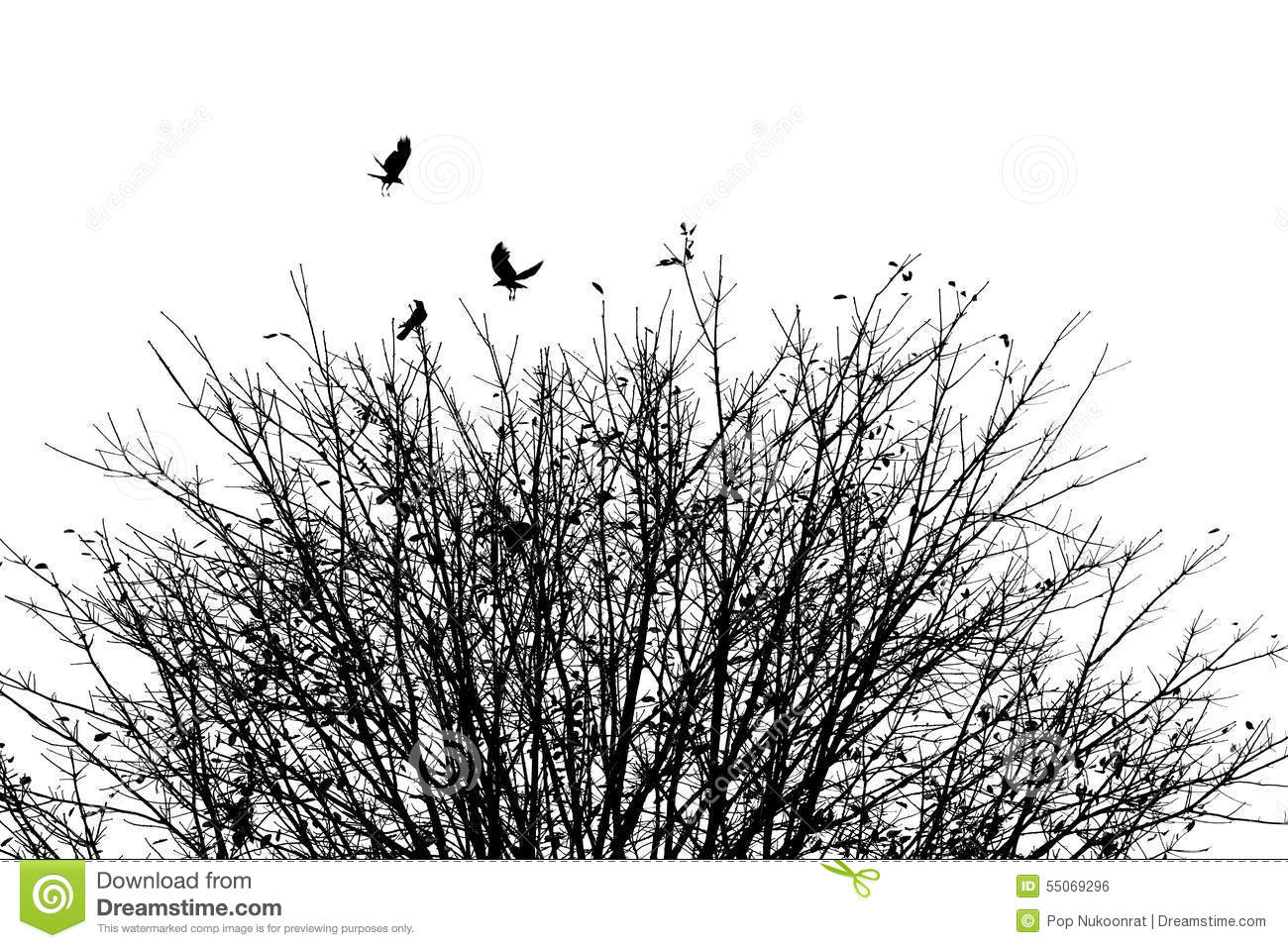 The Crow Your Autumn Of Tomorrow