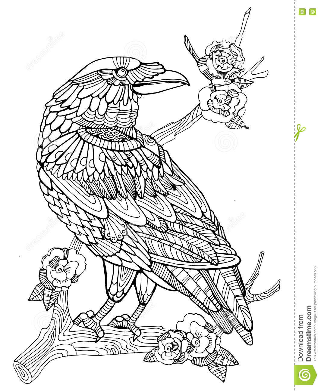 Crow Bird Coloring Book For Adults Vector Stock Vector - Image ...