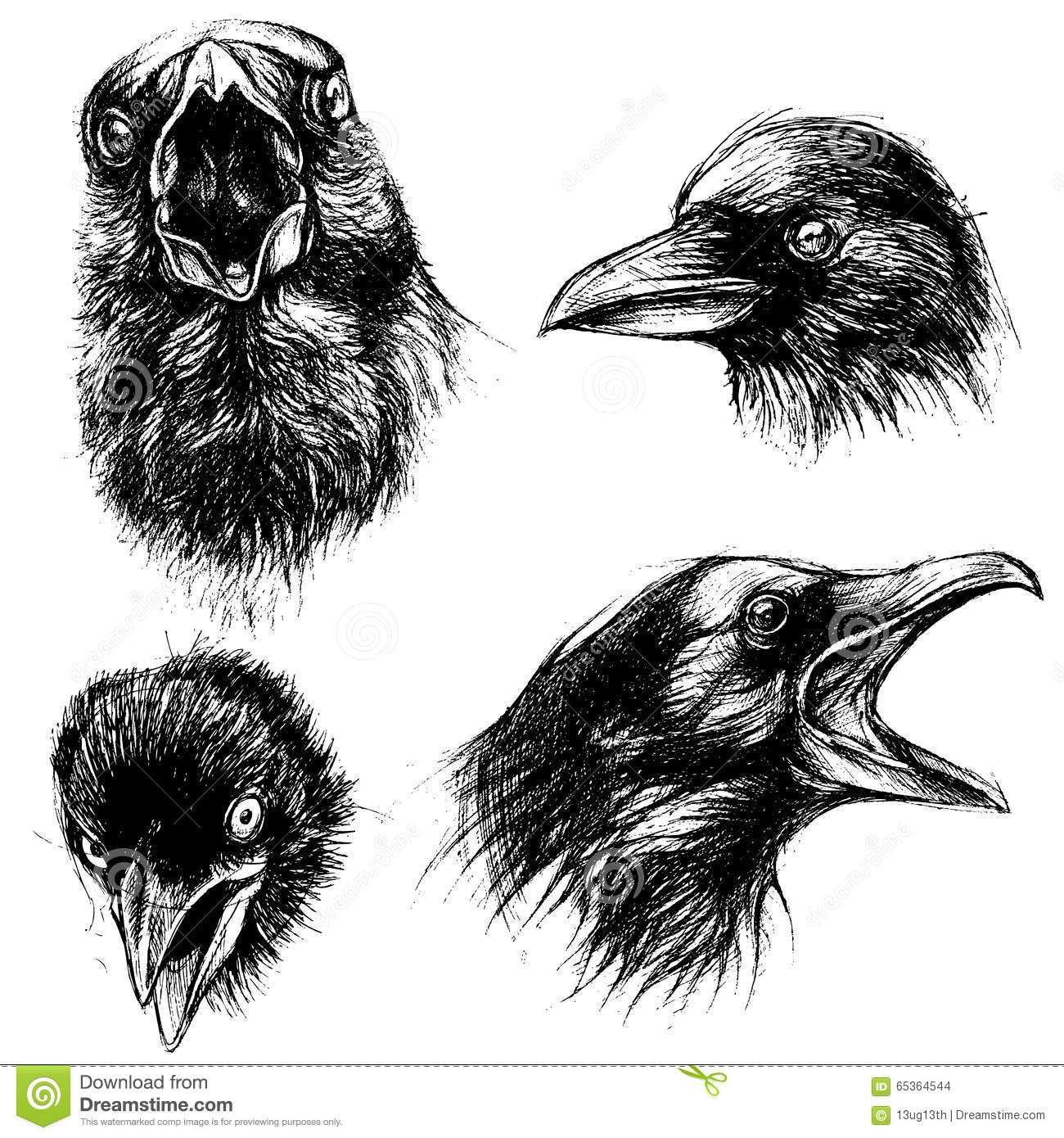 Drawing Lines Using Html : Crow head drawing line work vector illustration