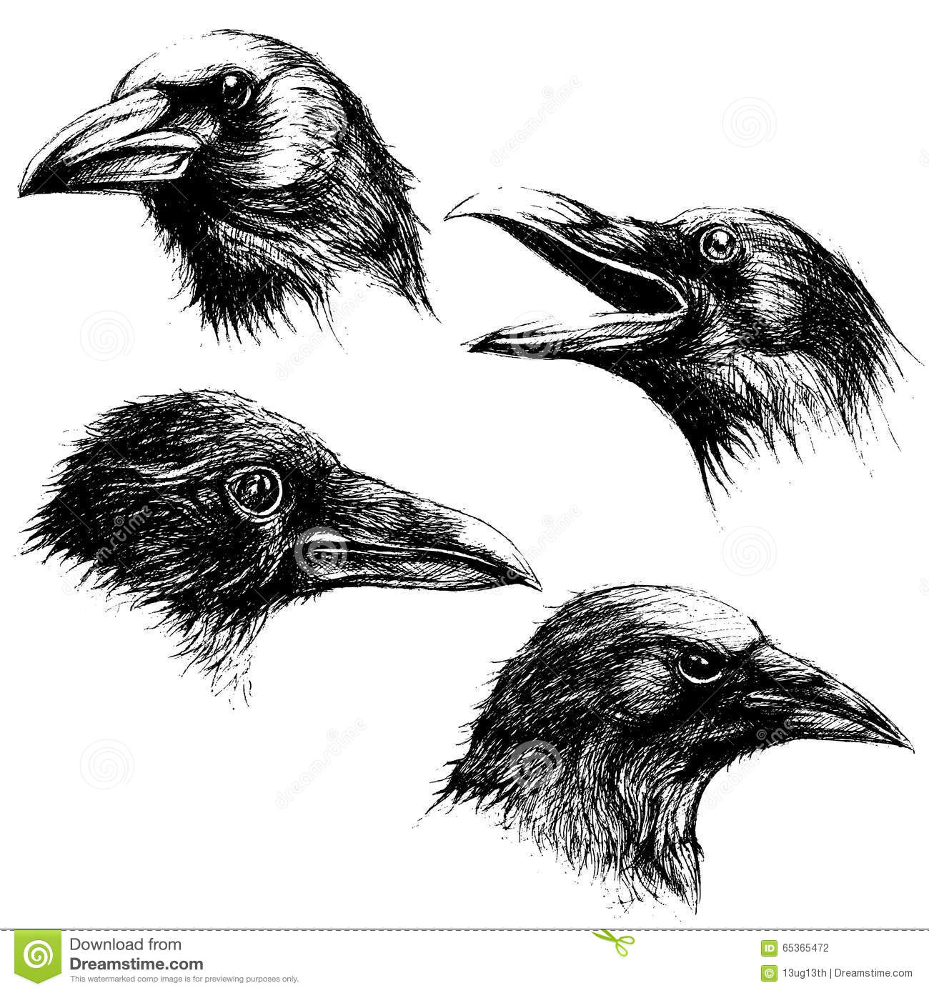 Crow Head Drawing Line Work Vector Stock Vector - Image: 65365472
