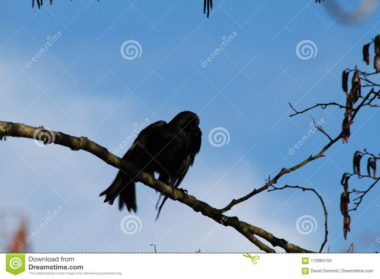 A crow perched on a branch