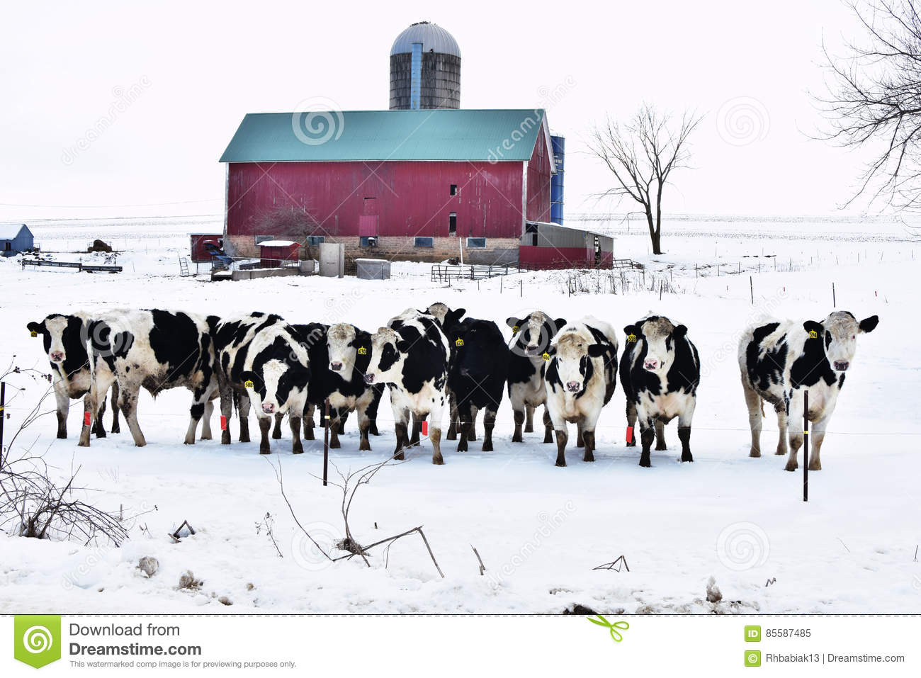 Crowd of Cows