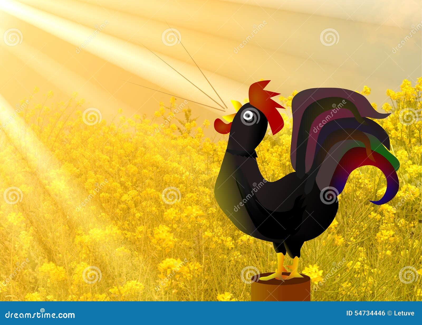 Crowing rooster golden sunshine morning