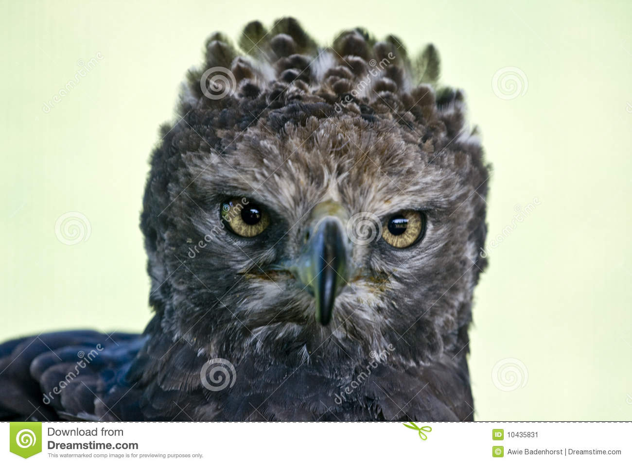 polish flag flag of poland with crowned eagle stock images