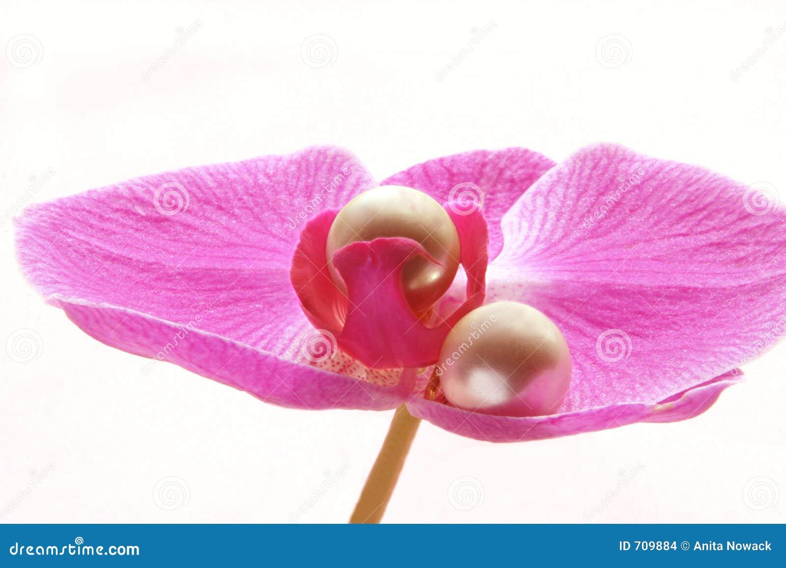 Crowned Pearls
