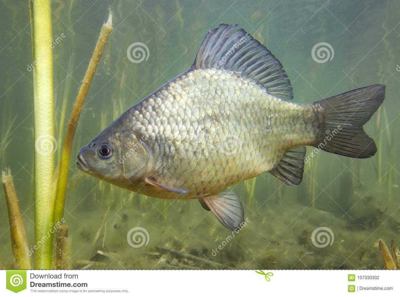 How to catch a crucian carp on a float rod - advice from anglers 65
