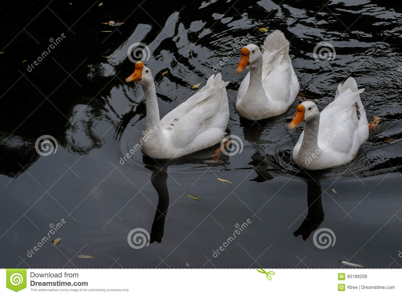 Cruising in the pond in the Great White Goose