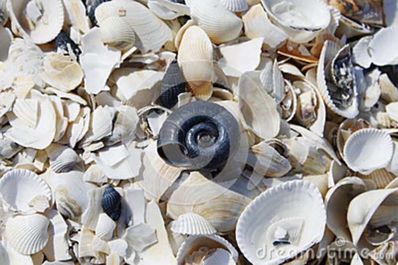 Crushed sea shells scattered on ground