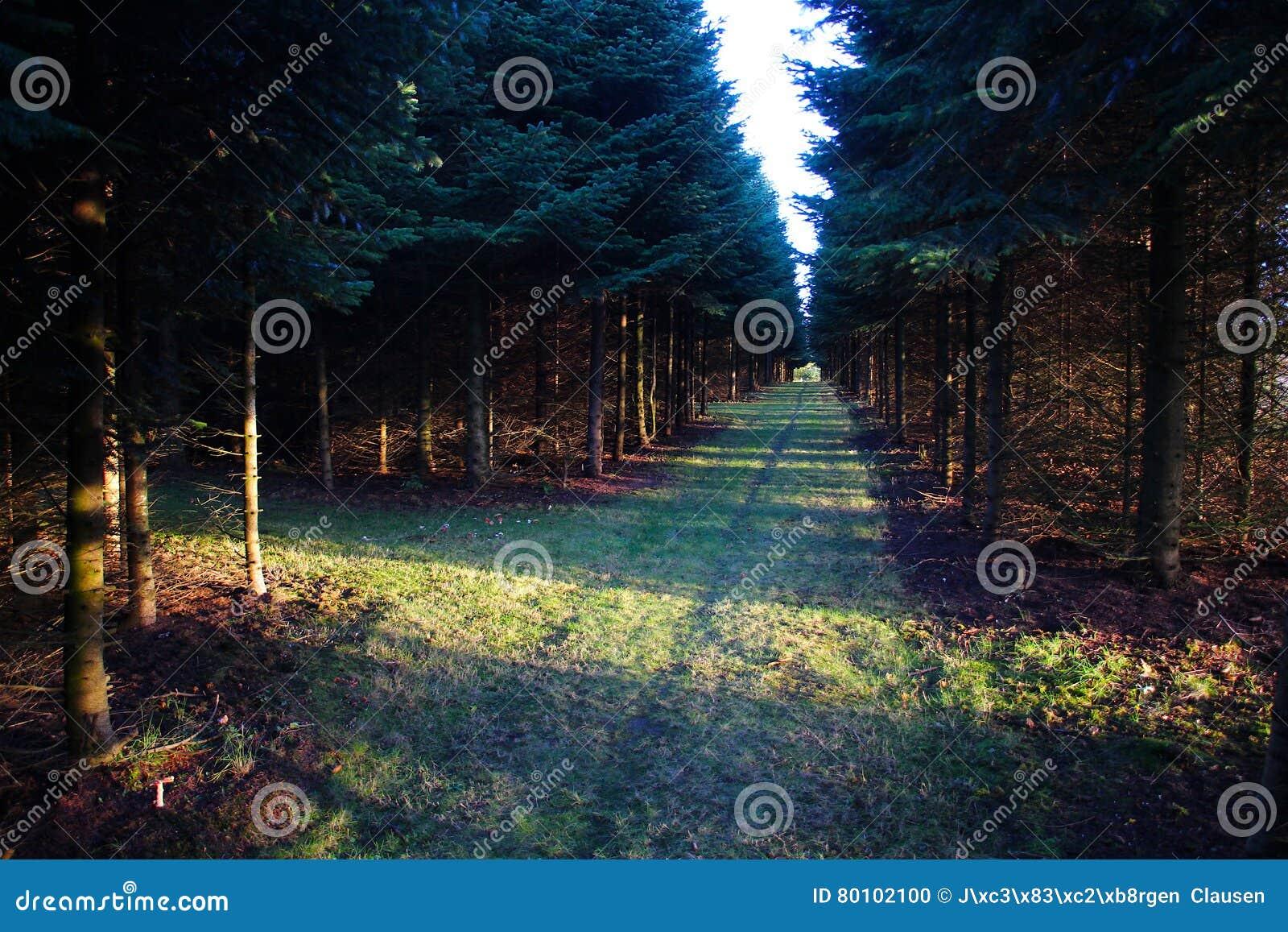 Cruz da floresta no sol