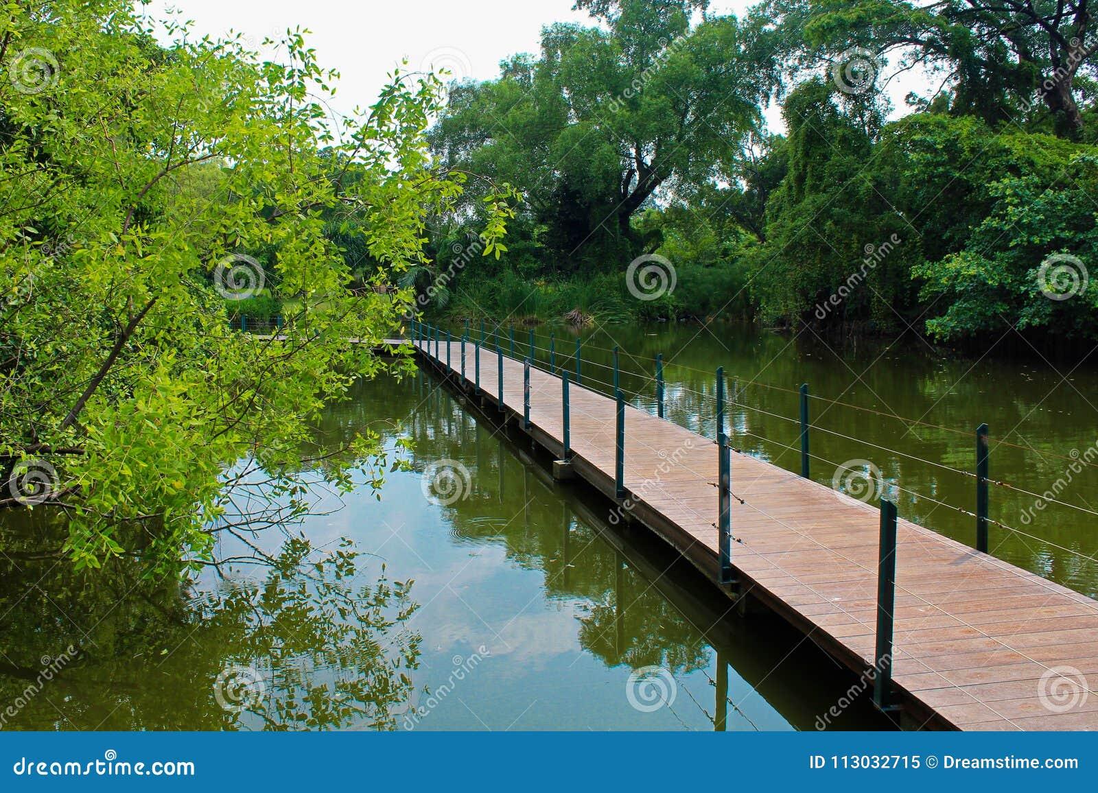 Cruzar el puente en una charca en el parque de Lumpini, Tailandia