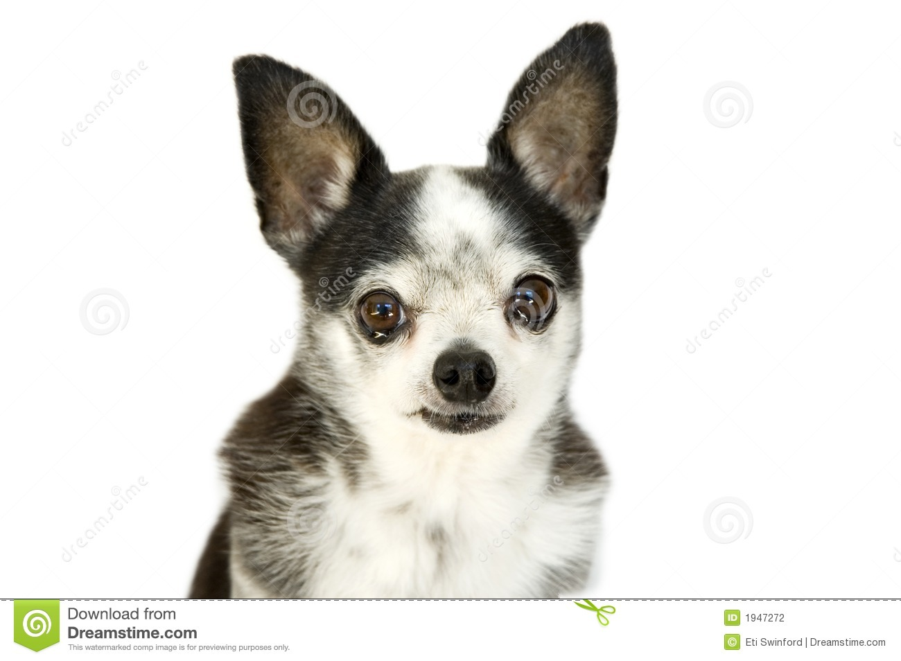 Crying Dog Stock Photography Image 1947272