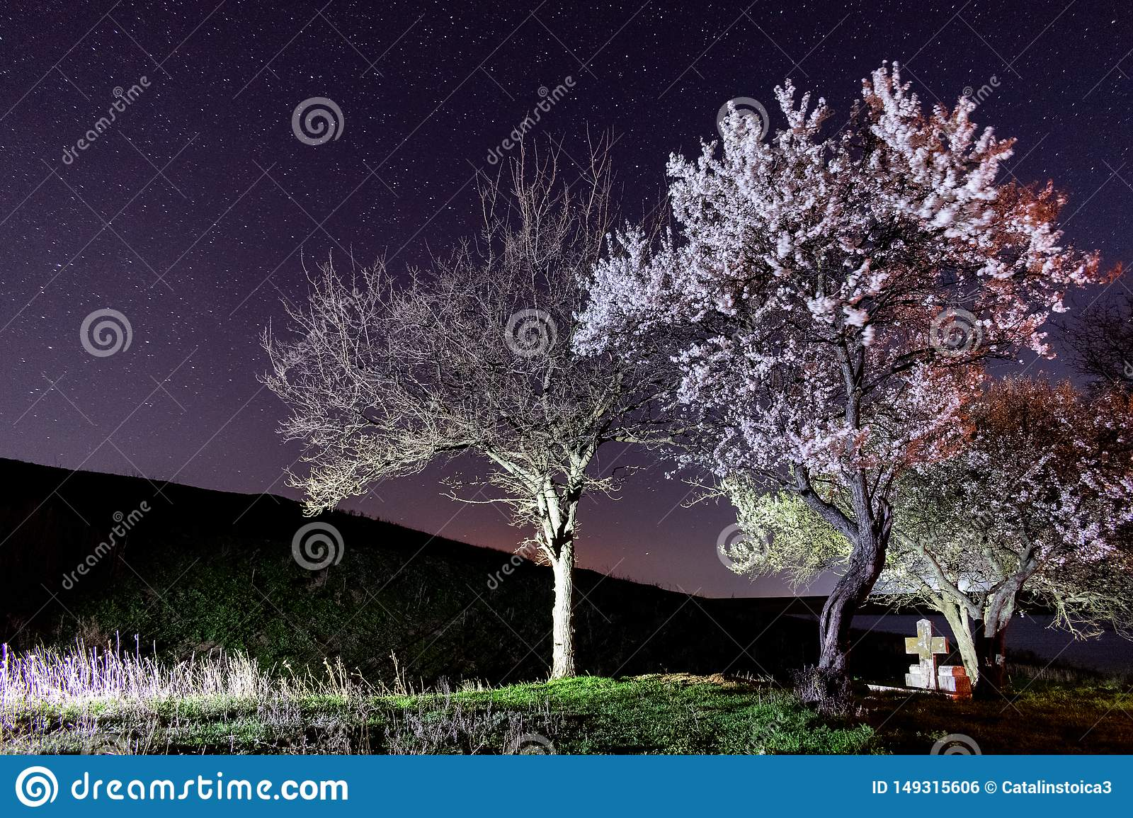 Crystal clear sky and stars over blooming trees.