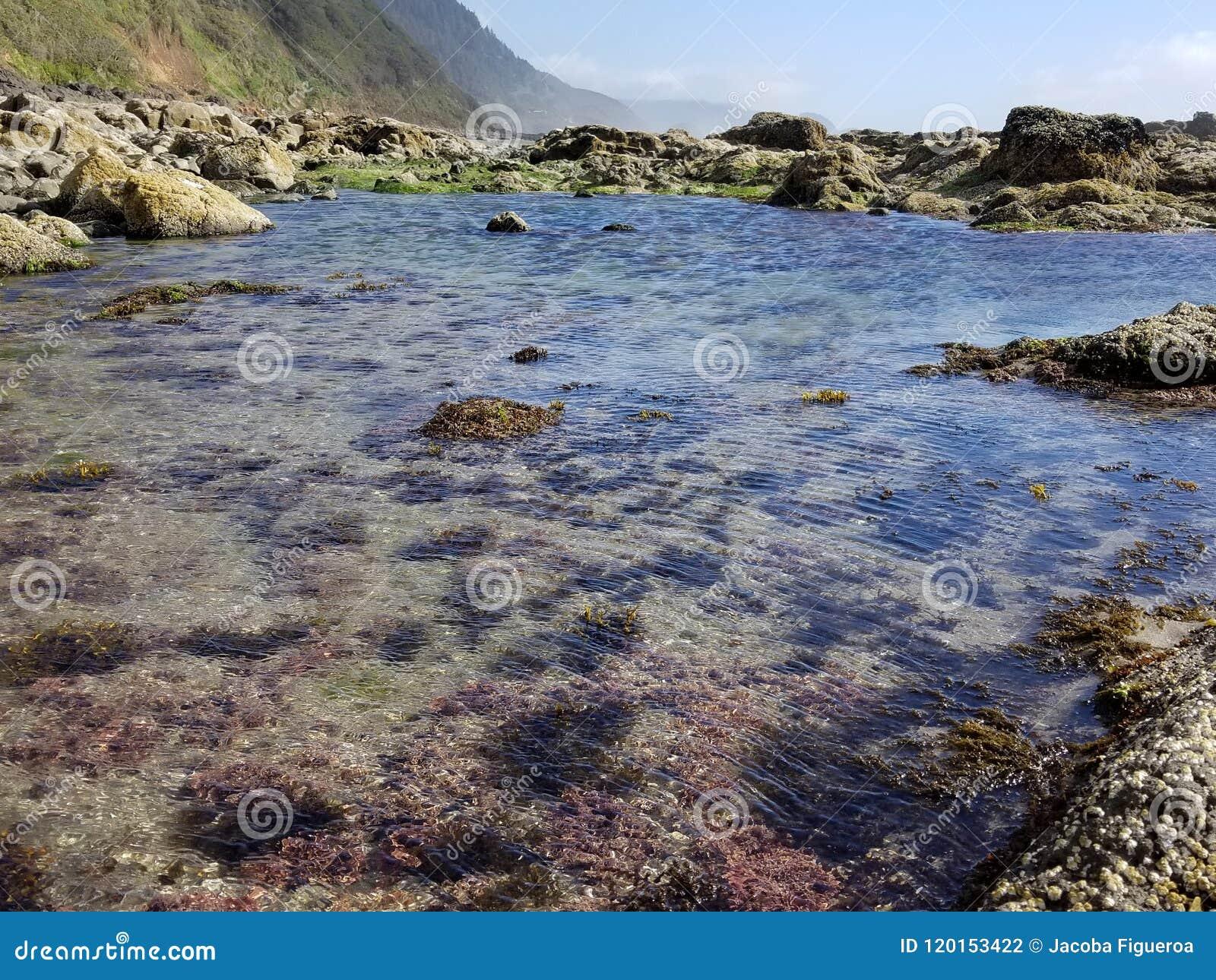 Crystal Clear Tide Pool