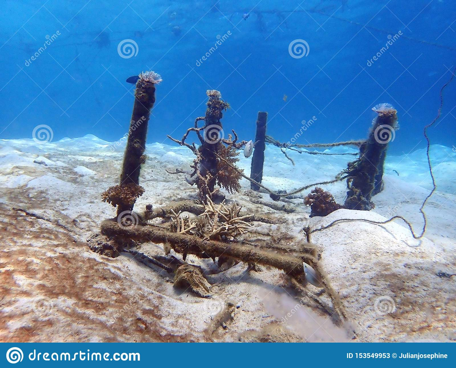 An abandoned table and tube coral grown on it in Tunku Abdul Rahman Park, Kota Kinabalu. Sabah, Malaysia. Borneo.